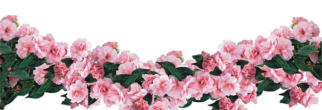 flowers_2_en